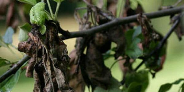 Tree disease management