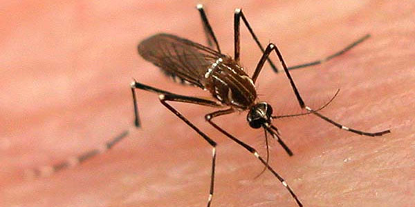 mosquito control near me