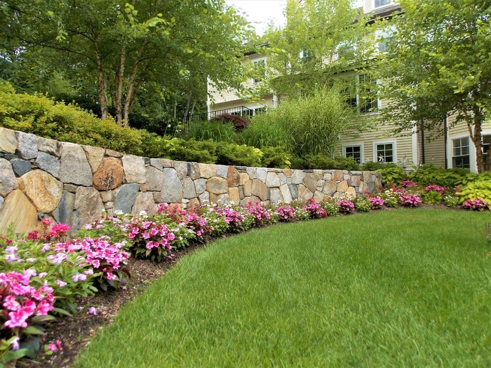 lawn-plant-care