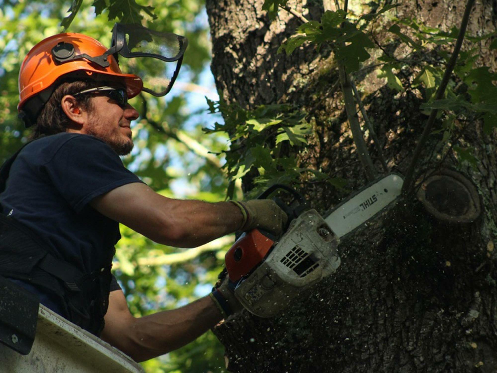 tree-pruning-box