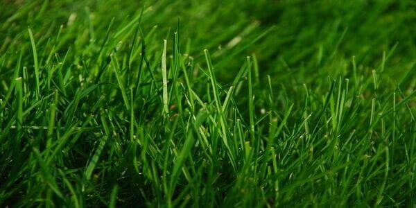 lawn application near me